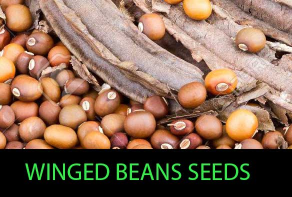 winged beans seeds